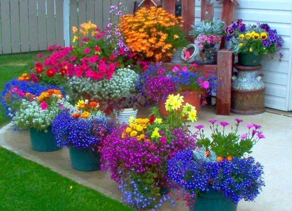 Какие сажать цветы на даче 35