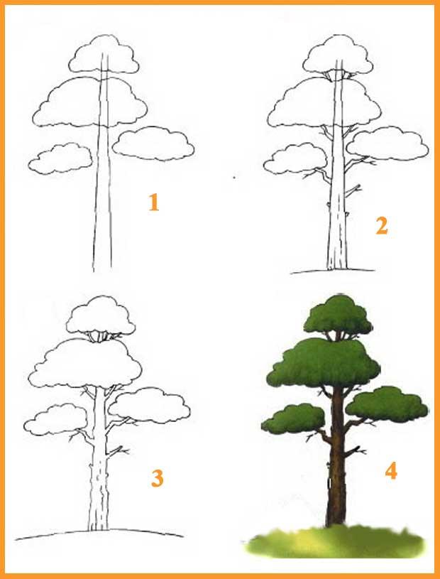 Нарисовать хвойные деревья карандашом поэтапно
