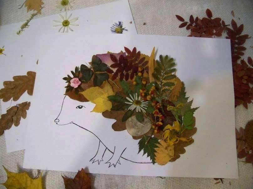 Гербарий из цветов для школы